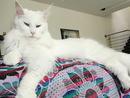 Pet:Owner: Cecilia Prinsloo