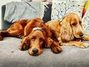 Pet: Riley and PieOwner: Samir Kilachand