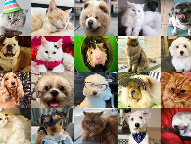 Cutest pet: Time Out UAE Virtual Pet Show